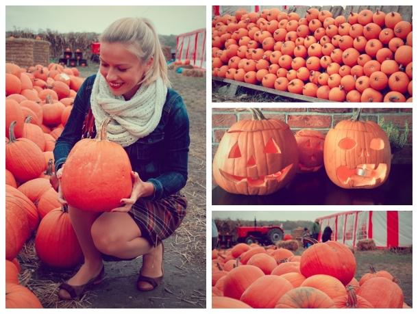 pumpkin mix 0